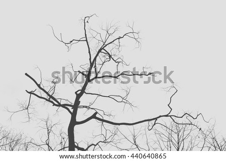Branches tree silhouette  - stock photo