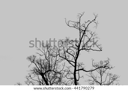 Branches tree silhouette and birds