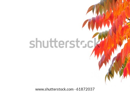Branches with colorful leaves in autumn - stock photo