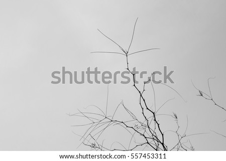 Branches with thorns and twigs against a gray winter sky.