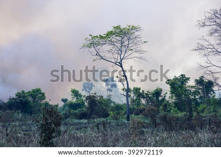 Brazilian Amazon Forest burned to open space for pasture - stock photo
