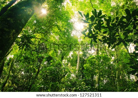 Brazilian Rainforest - stock photo