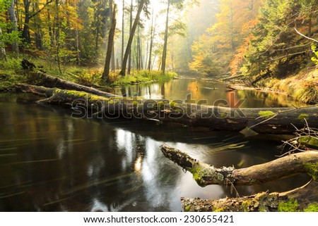 Brda river in north Poland.Autumn time/Autumn river and forest  - stock photo