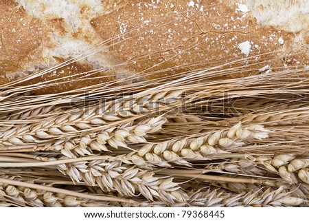Bread and wheat represented in a still life