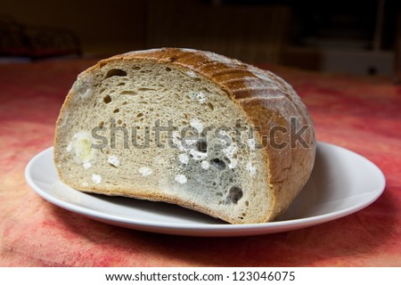 Bread covered in fuzzy green and white mould - stock photo