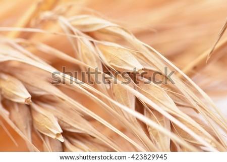 Bread ears - stock photo