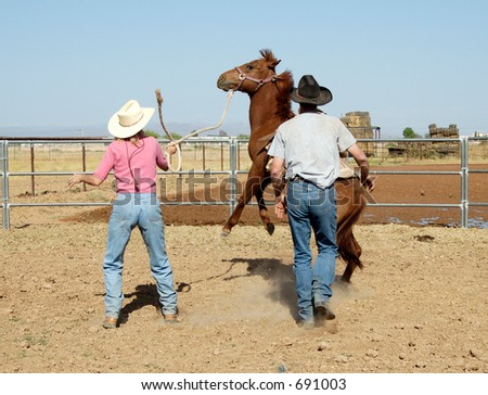 Breaking a young horse for riding. - stock photo