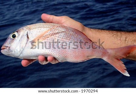 Bream in hand during a fishing trip