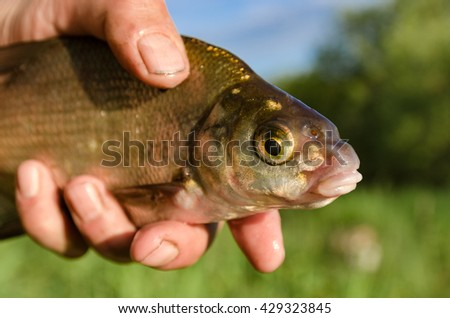 Bream in the hands