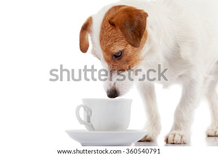 Breed doggie Jack Russell with a white cup on a white background. - stock photo