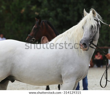 Breeder hold a horse with bridle on a horse show. - stock photo