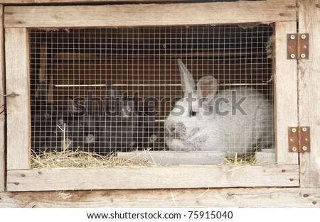 Breeding rabbits on a farm in small boxes - stock photo