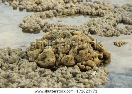 Brian corals in shallow waters during low tide - stock photo