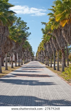 Brick sidewalk lined with palm trees on the campus of New College of Florida, with the Charles Ringling mansion in the background. - stock photo