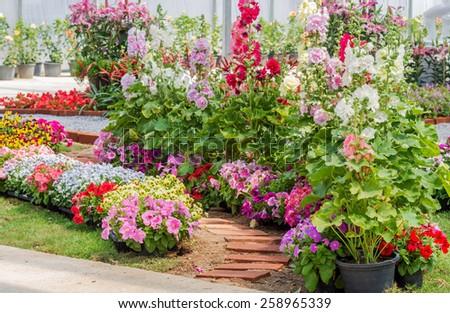 Brick walkway with beautiful flowers on side in flower garden - stock photo