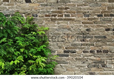 Brick wall background with plant at the left. Your text at the right