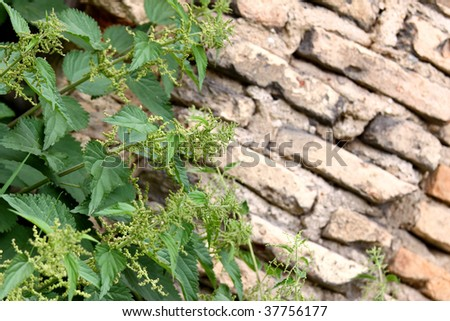 Brick wall ruins and green nettle. Perfect background with copy space on the right - stock photo