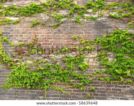 Brick wall with leafs