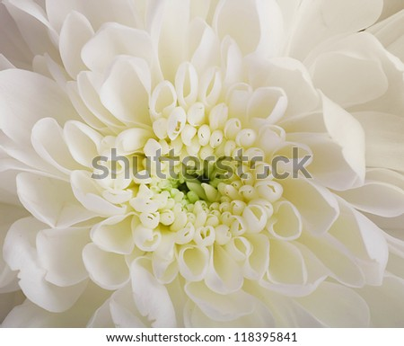 Bridal bouquet from white and pink flowers - stock photo