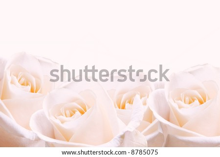 Bridal bouquet of pale pink roses. - stock photo