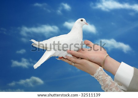 bride and groom holding beautiful dove