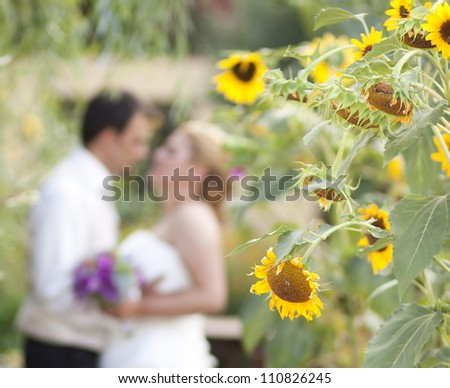 Bride and groom kissing and blurred - focus on sunflower - stock photo