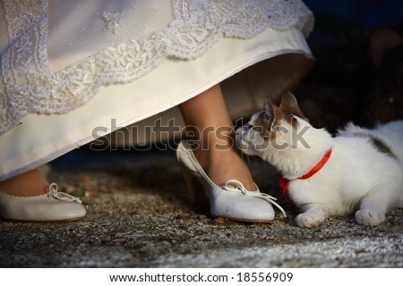 Bride and her pet - stock photo