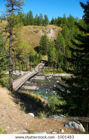 bridge, firs and river. Altay
