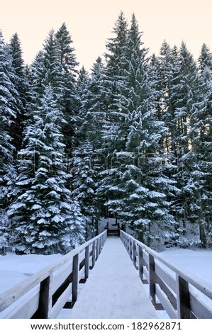 Bridge in the forest in the winter - stock photo
