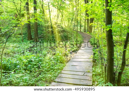 Bridge in the sunny green forest with trees