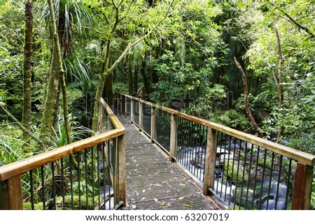 Bridge in tropical forest - stock photo