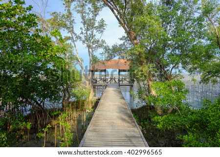 Bridge of wood in the mangrove forest