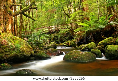 Bridge over a river in a lush cool temperate rainforest.  Tree ferns, mossy boulders and ancient beech myrtle trees.  Victoria, Australia. - stock photo