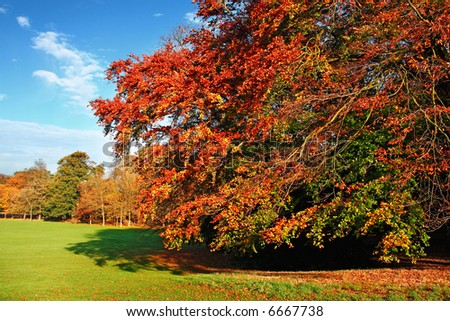 Bright and colourful autumn scene - stock photo