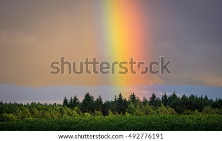 bright and huge rainbow over the forest