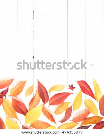 Bright and Pretty Fall Display of Colorful Ash Leaves in Natural Tones on bottom for a Thanksgiving or Halloween Card on Rustic White Board Background with room or space for copy, text, or your words