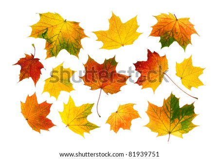 Bright and vibrant studio isolation of collected autumn leaves - stock photo