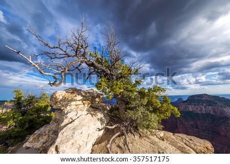 Bright Angel point trail, Grand Canyon, North Rim - stock photo
