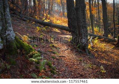 Bright autumn colours in the ancient forest of Central Balkan National Park - stock photo