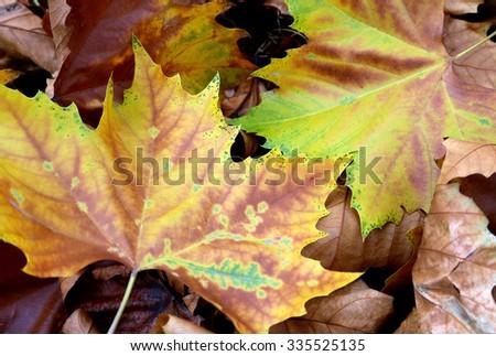 Bright autumn foliage natural background - stock photo