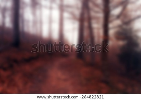 Bright autumn forest background best for web usage - stock photo