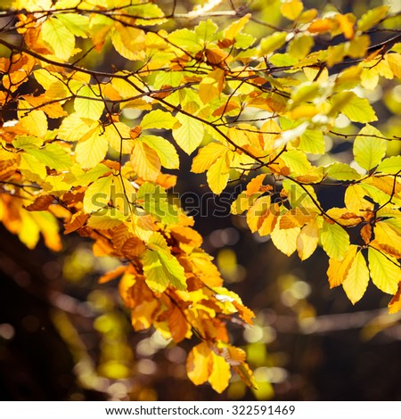 Bright autumn leaves, fall trees, yellow nature background - stock photo