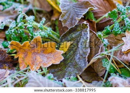 bright autumn leaves that are covered with frost - stock photo
