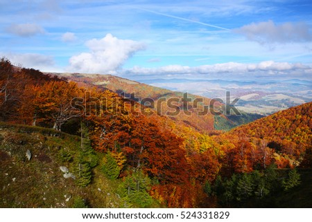 Bright Autumn sky and yellow and red beech forest in the Carpathian Mountains in the golden autumn season.