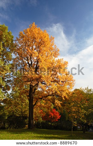 Bright autumn tree in a park over deep blue sky