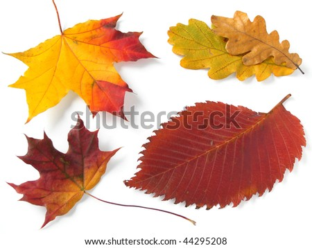 bright autumnal leaves on white - stock photo