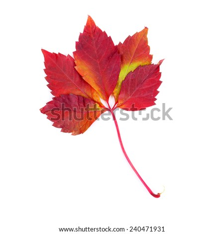 bright beautiful autumn red leaves - stock photo