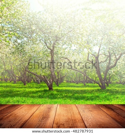 Bright beautiful light blooming rural apple trees alley in sunny spring park over blue sky with first dawn rays on the wall inside room interior with frame textured wooden panel floor background