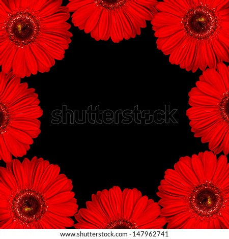 bright beautiful red gerber border with black background - stock photo