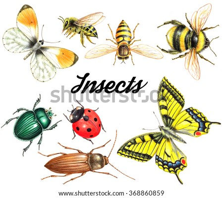 bright beautiful watercolor insects isolated on white background - stock photo